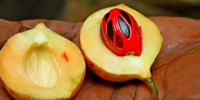 buah pala dari Maluku